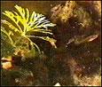 alga[1]