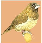 Pájaros de jaula – Isabelitas
