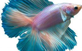 Breve historia de la acuariofilia