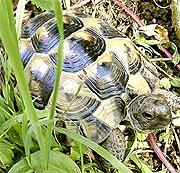 Construir un recinto para tortugas terrestres