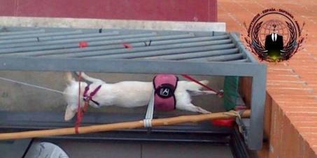 Denuncia social: Justicia para Kika y Lola, las dos chihuahuas torturadas en Barcelona