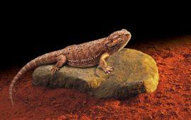 La importancia de la temperatura en los reptiles