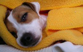 ¿Cuándo está enfermo su perro?