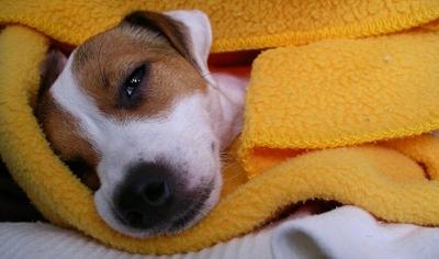 ¿Cuándo su perro está enfermo?