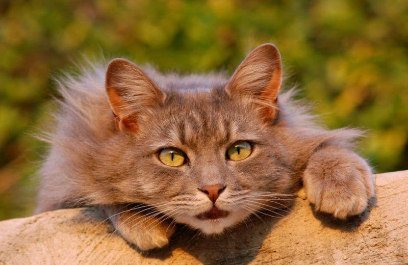 Tu gato ¿come lo que debe?