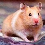 Soltar o no a nuestros roedores