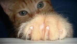 Uñas en el gato