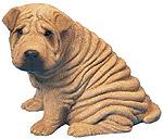 Las arrugas en los perros Shar-pei