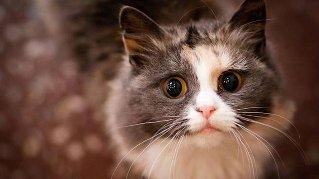 Revelan cómo domesticó el humano a los gatos