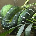 Vitaminas esenciales para los reptiles