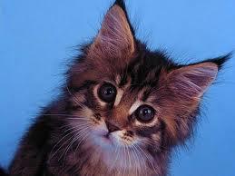 Un nuevo gatito en casa