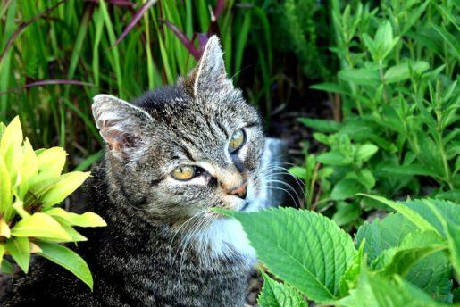 Gato con plantas