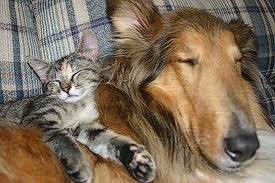 La relación de los perros con otros animales