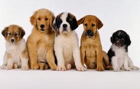 ¿Es obligatorio asegurar a los perros?