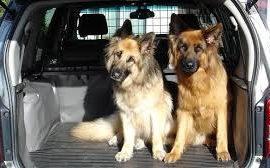 Consejos de la DGT para viajar con su mascota