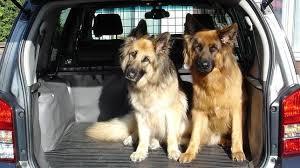 Cinturón para perros que viajan en coche
