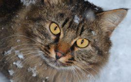 El cuidado de los gatos en el invierno