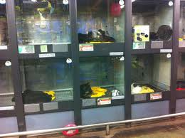 Animales en tiendas: ¿en qué condiciones deben estar?