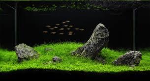 Decoración del acuario: rocas y madera
