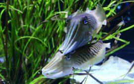 Decoración del acuario: materiales del fondo