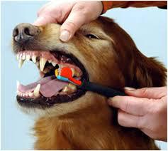 Cuidado dental canino