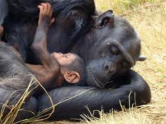 ¿Somos los únicos animales racionales?