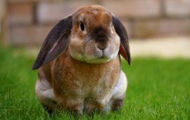 Esterilización y castración en los conejos