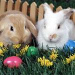 Conejos miedosos o agresivos