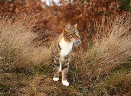 El sentido de independencia en el gato