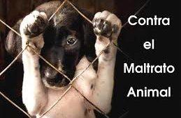 El maltrato de los animales domésticos