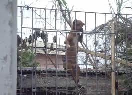 ¿Porque se escapan los perros?