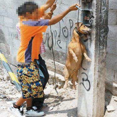 Violencia hacia los animales