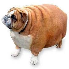 Los perros españoles tienen sobrepeso