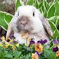Riesgos para los conejos en el exterior de la casa