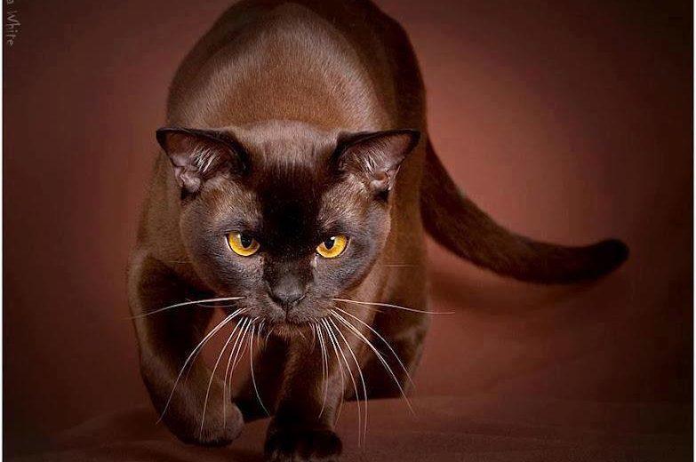 El lenguaje corporal del gato