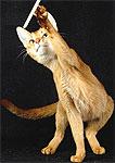 El genoma del gato