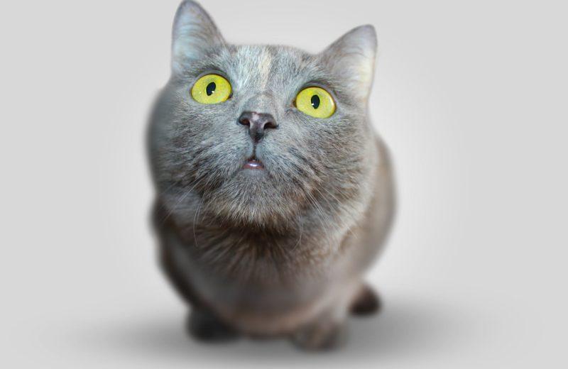 ¿Por qué brillan los ojos del gato en la oscuridad?