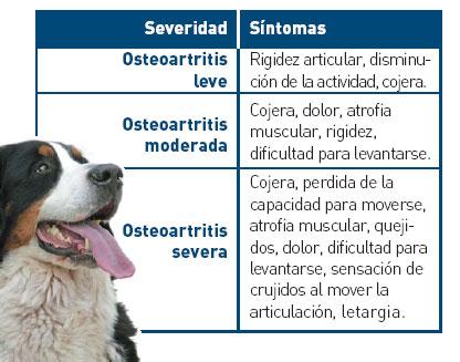 La artrosis en los animales de compañía
