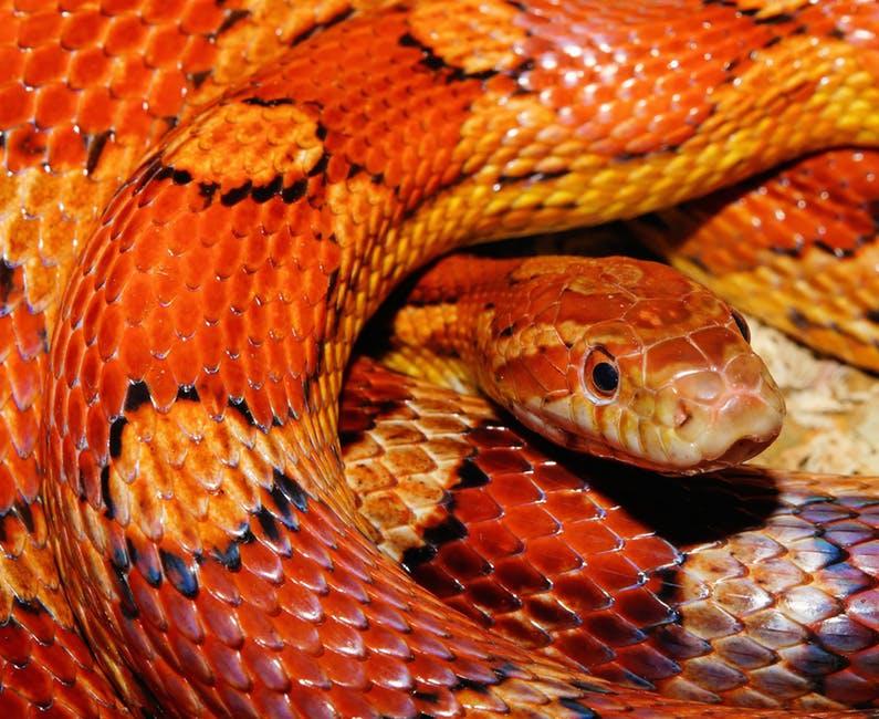 Los dientes de la serpiente