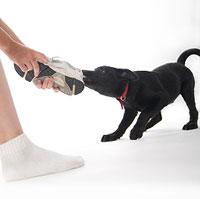 Cachorro jugando a morder