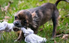 ¿Cómo enseñar a tu cachorro a no hacer daño cuando muerde?