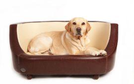 La cama del perro, un lugar de reposo