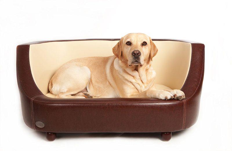 Cama del perro