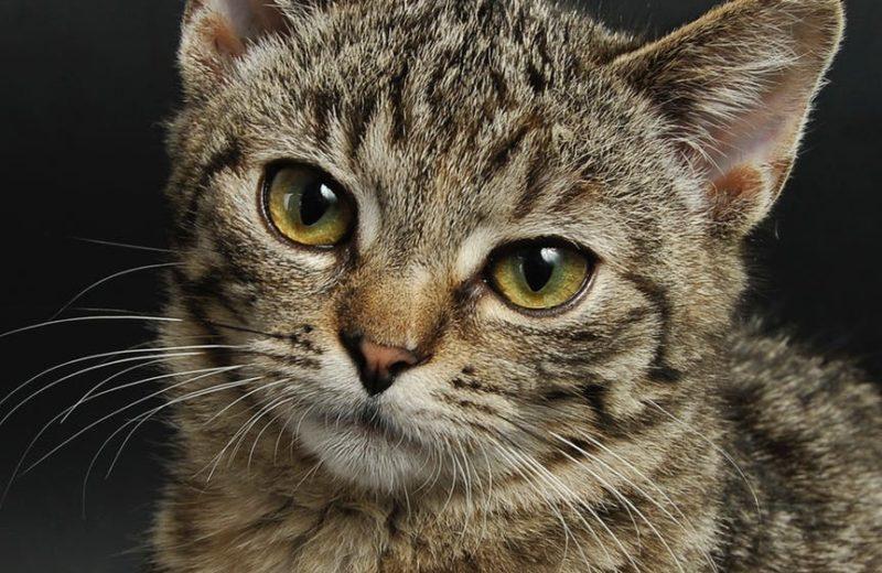 NOTA DE PRENSA: Detectado el primer gato infectado con el nuevo coronavirus en España