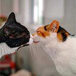 Comportamiento social del gato