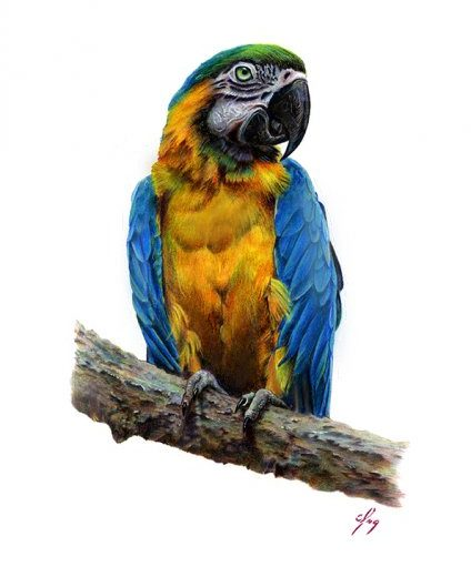 El Guacamayo Azul y Amarillo