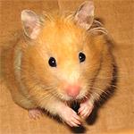 hamster_4 (1)