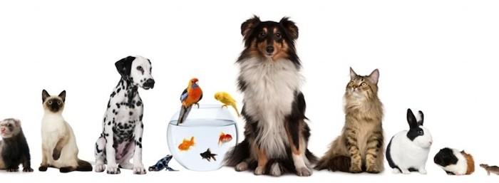 El Ayuntamiento de Huelva colabora en la gestión del registro municipal de animales de compañía