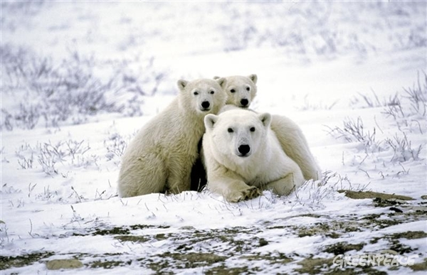 El Parlamento Europeo quiere un Santuario en el Ártico