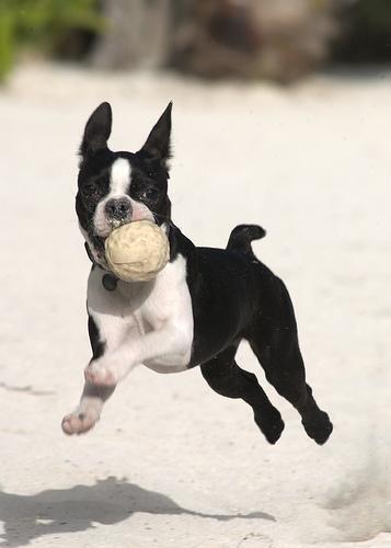 El juguete más apropiado para un perro